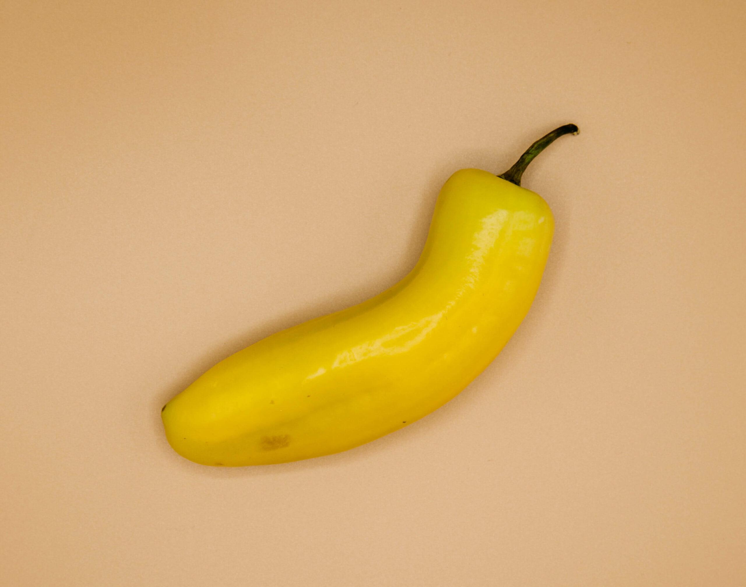 Sned penis2